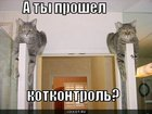 https://lolkot.ru/2011/07/12/kotkontrol/