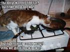 https://lolkot.ru/2013/04/04/kotleta-2/
