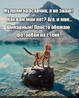 https://lolkot.ru/2020/04/12/kotofotozamenitel/