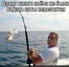 https://lolkot.ru/2010/07/20/koty-nerestyatsya/