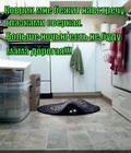 https://lolkot.ru/2014/12/11/kovrik-tozhe-hochet-kushat/