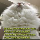 https://lolkot.ru/2017/11/16/kreativnaya-putanitsa/