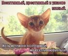 https://lolkot.ru/2014/05/05/kreativnyy/