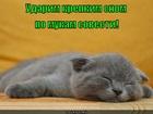 https://lolkot.ru/2012/05/13/krepkiy-son/