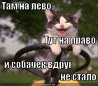 https://lolkot.ru/2013/02/25/kruto-nayehal/