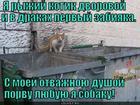 https://lolkot.ru/2015/07/18/kto-na-novenkogo-3/