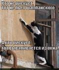 https://lolkot.ru/2012/09/03/kto-ne-riskuyet-2/