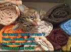 https://lolkot.ru/2014/07/31/kto-pervyy-lyog-togo-i-postel/