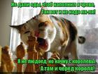 https://lolkot.ru/2015/12/18/kto-sleduyuschiy/