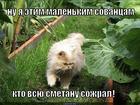 https://lolkot.ru/2014/12/26/kto-smetanku-kushal/