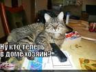 https://lolkot.ru/2012/02/01/kto-v-dome-hozyain-2/