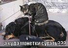 https://lolkot.ru/2012/01/10/kuda-monetki-suvat/