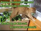 https://lolkot.ru/2014/12/26/kulinariya/