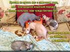 https://lolkot.ru/2019/02/19/kulturnoye-blagorodstvo/