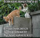 https://lolkot.ru/2014/03/29/kupaniye/