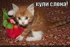 https://lolkot.ru/2012/04/10/kupi-slona/