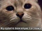 https://lolkot.ru/2012/08/10/kupi-slona-2/