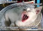 https://lolkot.ru/2014/12/06/kusachaya-pechenyushka-na-strazhe-za-vashey-tushki/