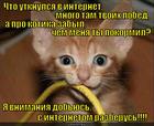 https://lolkot.ru/2015/05/25/kusachki/