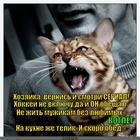 https://lolkot.ru/2014/02/15/kushat/