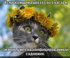https://lolkot.ru/2012/10/18/kvalifitsirovannyy-sadovnik/