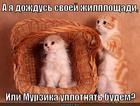 https://lolkot.ru/2014/07/14/kvartirnyy-vopros-2/