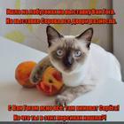 https://lolkot.ru/2016/01/30/labuteny-zhmut/