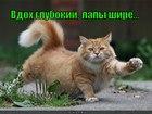https://lolkot.ru/2012/05/29/lapy-shire/