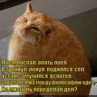 https://lolkot.ru/2014/10/16/lenivyy-filosof/