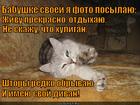 https://lolkot.ru/2015/01/02/lenivyy-hozyaystvennik/