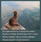 https://lolkot.ru/2014/11/03/letneye-utro-na-ozere/