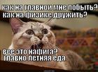 https://lolkot.ru/2012/12/06/letnyaya-yeda/