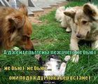 https://lolkot.ru/2011/07/09/lezhachego-ne-byut/