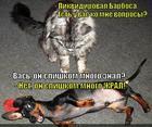 https://lolkot.ru/2014/11/25/likvidatsiya-nahlebnika/