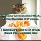https://lolkot.ru/2016/08/17/lishniy-element/