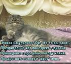 https://lolkot.ru/2017/02/04/litsezritel/
