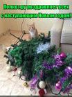 https://lolkot.ru/2015/12/31/lolkot-ru-pozdravlyayet-vseh-s-nastupayuschim-novym-godom-2/
