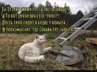https://lolkot.ru/2019/07/18/lopatnyye-razdumya/