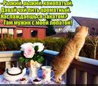 https://lolkot.ru/2017/01/26/lopatougonschik/