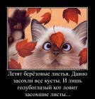 https://lolkot.ru/2016/10/24/lovets-listov/