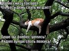 https://lolkot.ru/2014/01/20/lozhis-spat-sobaka/