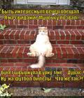 https://lolkot.ru/2014/01/19/luchshiy-podarok-zhenschine/