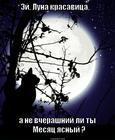 https://lolkot.ru/2012/10/12/luna/