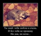 https://lolkot.ru/2014/11/14/lyubite-koteyek/