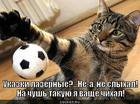 https://lolkot.ru/2014/07/01/lyubitel-myachikov/