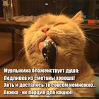 https://lolkot.ru/2020/06/12/malomernoye-blazhenstvo/