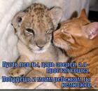 https://lolkot.ru/2014/12/02/mama-koshka/