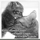 https://lolkot.ru/2013/01/02/mama-2/
