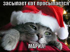 https://lolkot.ru/2013/02/02/mariya-mariya/
