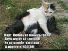 https://lolkot.ru/2019/03/06/martovskaya-shutka/